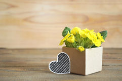 Yellow primrose flowers arranged in gift box Stock Photo
