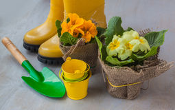 Yellow primula on a background of yellow boots Royalty Free Stock Photo