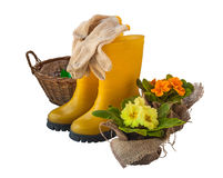 Yellow primula on a background of yellow boots isolated Royalty Free Stock Photos