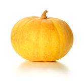 Yellow pumpkin Stock Image