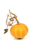 Yellow pumpkin. Yellow decorative pumpkin on a white background Royalty Free Stock Photography