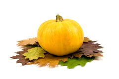 Yellow pumpkin and autumnal leaves Royalty Free Stock Images