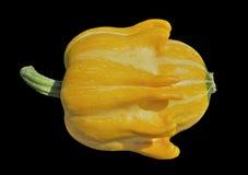 Yellow pumpkin 3 Stock Photography
