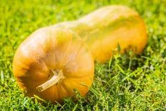 Yellow  pumpkin closeup on the green grass Stock Photos