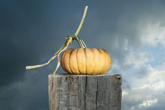 Yellow pumpkin and a dark sky. Autumn photo: Yellow pumpkin and a dark sky Royalty Free Stock Photography