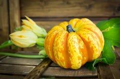 Yellow pumpkin on dark wooden table in garden. Close up Stock Photos