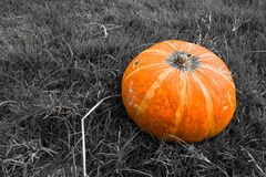 Yellow Pumpkin on Grass Background Stock Images