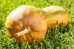Yellow pumpkin on a green grass Royalty Free Stock Photo