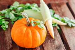 Yellow pumpkin with green leaves and corn Stock Photos