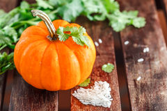 Yellow pumpkin with green leaves and rice Stock Photos