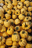 Yellow pumpkin pile Royalty Free Stock Images