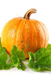 Yellow pumpkin vegetable with green leaves Stock Images