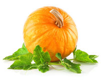 Yellow pumpkin vegetable with green leaves Royalty Free Stock Photography