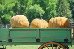 Yellow pumpkins on rickshaw at countryside whit green trees background. royalty free stock images