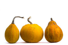 Yellow pumpkins. Three yellow pumkins in the row Royalty Free Stock Image