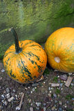 Yellow pumpkins Royalty Free Stock Photo