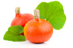 Yellow pumpkins vegetables with green leaves Stock Photo