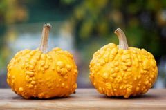 Yellow pumpkins on wooden board Royalty Free Stock Photography