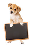 Yellow Puppy Carrying Blank Sign Royalty Free Stock Image