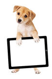 Yellow Puppy Carrying Blank Tablet Computer Royalty Free Stock Photos