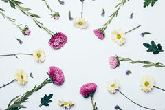 Yellow, purple and blue flowers on a white background royalty free stock photos