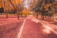 Yellow and purple colorful leaves autumn colors in the park outdoor with tree and road Royalty Free Stock Photos