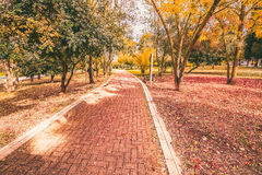 Yellow and purple colorful leaves autumn colors in the park outdoor with tree and road Stock Photo