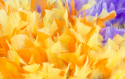Yellow Purple Feather Background Royalty Free Stock Photography