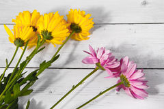 Yellow and purple flower and wood background valentine day Royalty Free Stock Images