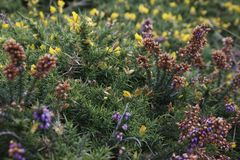 Yellow and purple flowers with juicy dark green leaves - the northern cold nature stock photos