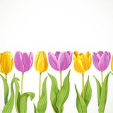 Yellow and purple flowers tulips seamless background Royalty Free Stock Photo