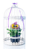 Spring in the cage Royalty Free Stock Image