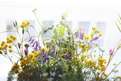Yellow and Purple Petaled Flower Royalty Free Stock Photos