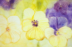 Yellow and purple violets. Stock Photos
