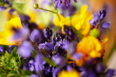Yellow and purple wild flowers Royalty Free Stock Images