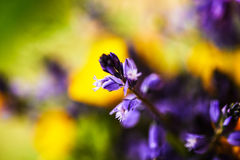 Yellow and purple wild flowers Royalty Free Stock Image