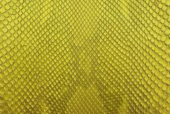 Yellow python snack skin texture background. Stock Photo