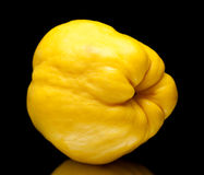 Yellow quince fruit isolated Royalty Free Stock Images