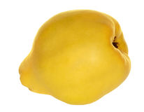 Yellow quince isolated on white Stock Images