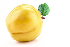 Yellow quince isolated white background. Quince isolated white on background Stock Images