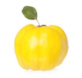 Yellow quince Stock Photo