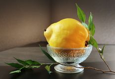 Yellow Quince in Vintage Vase Royalty Free Stock Photography