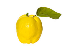 Yellow quince on a white background. Yellow quinces with green leaves on a white background stock images