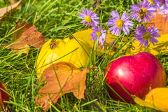 Yellow quinces and red apple among purple asters with  bees Royalty Free Stock Photo