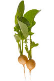 Yellow radish Royalty Free Stock Image