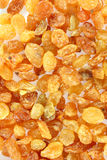 Yellow raisins (sultana) Royalty Free Stock Photos