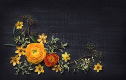 Yellow ranunculus on black background Royalty Free Stock Images