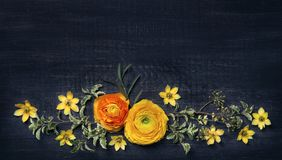 Yellow ranunculus on black background Stock Photography