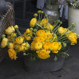 Yellow ranunculus (persian buttercup) Royalty Free Stock Photo