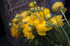 yellow ranunculus at the shop Stock Photography
